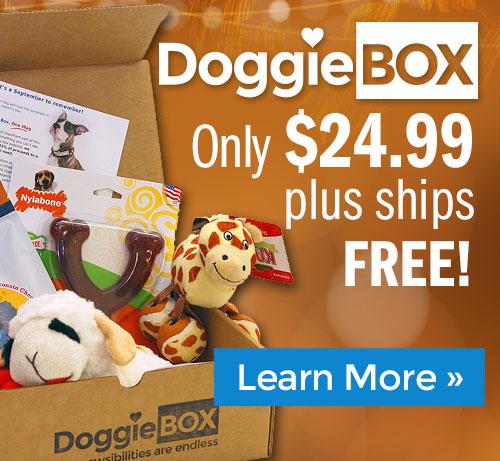 Shop Doggie Box!