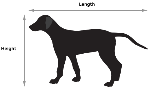 Dog Length/Height measurement example