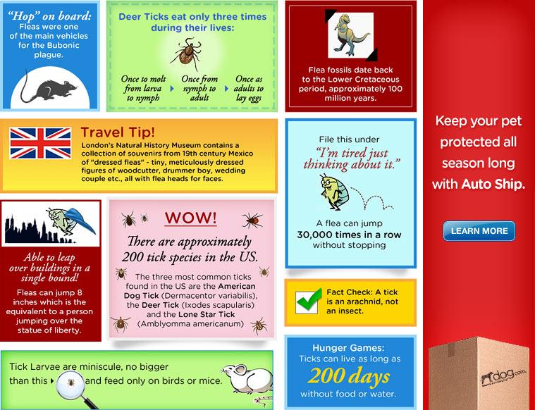 Flea and Tick Fun Facts