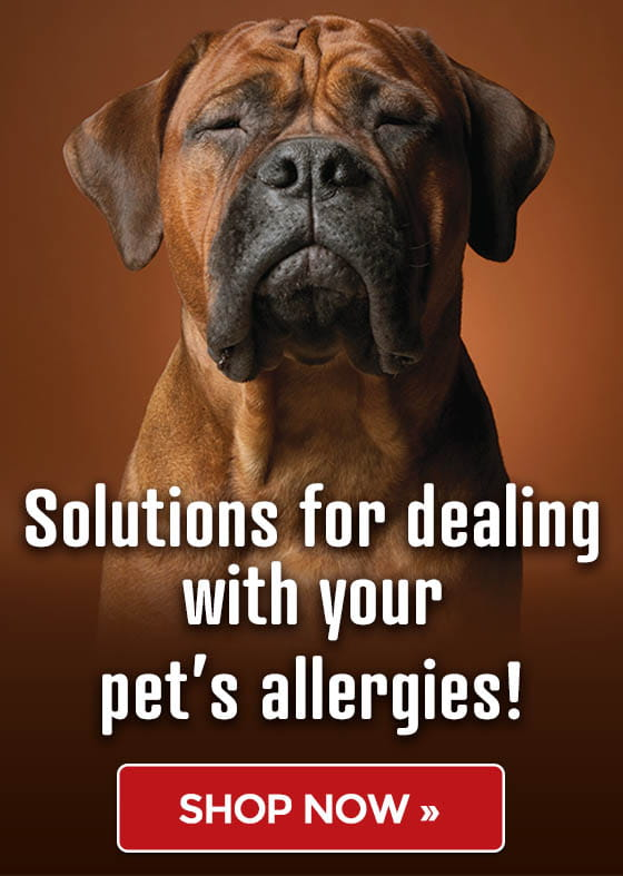 Asthma & Allergy Awareness Month - Solutions for dealing with your pet's allergies!