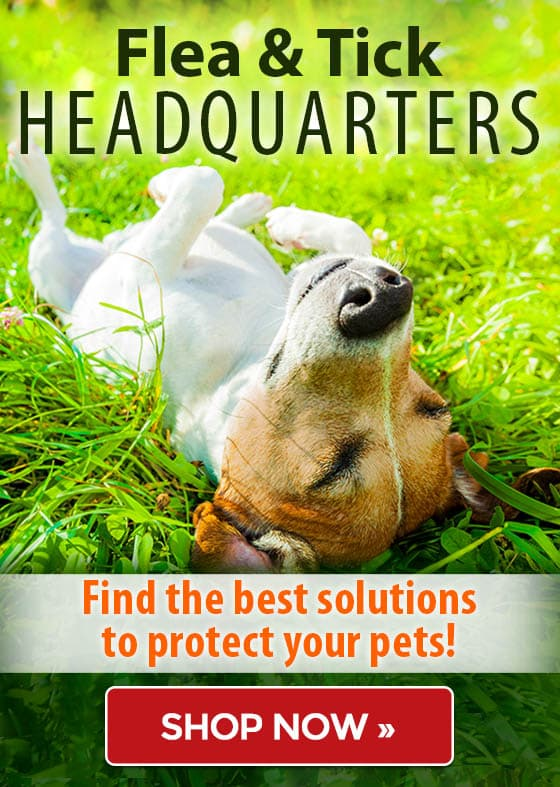 Flea & Tick Guide - Find the best solutions to protect your pets! Up to 67% off!