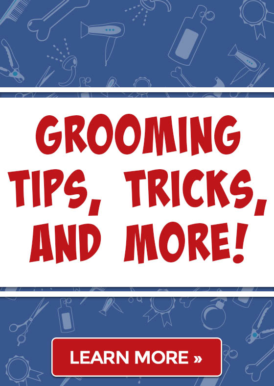 Grooming Tips, Tricks, and More