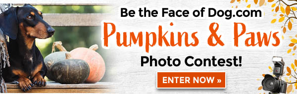 Be the Face of Dog.com! Pumpkins & Paws Photo Contest!