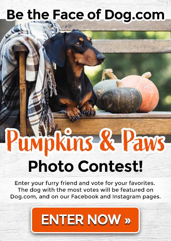 Face of Dog.com Photo Contest