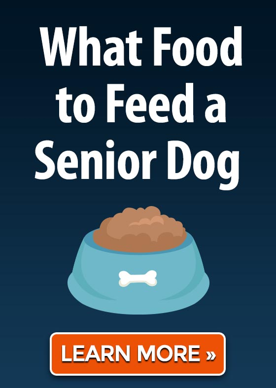 What Food to Feed a Senior Dog