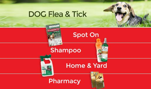 Dog Flea & Tick