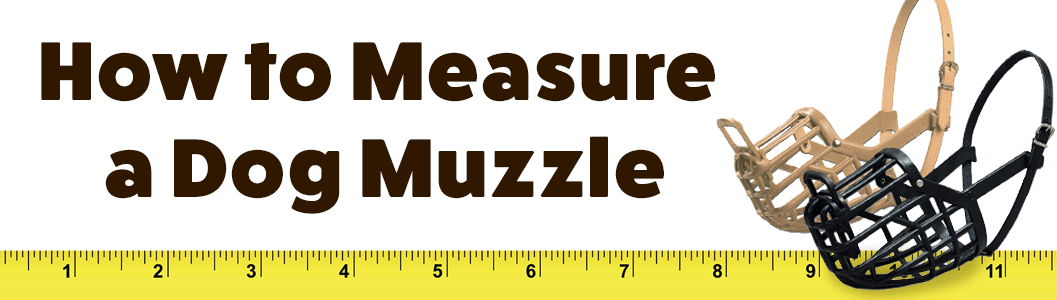 How to Measure a Dog for a Muzzle