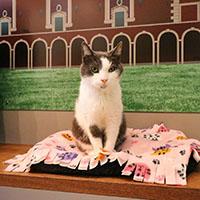 catsbury cat