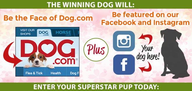 Dog.com Photo Contest
