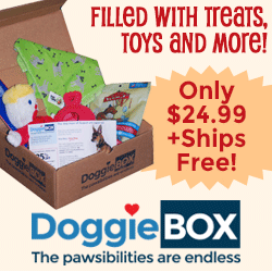 Buy a DoggieBox Today!
