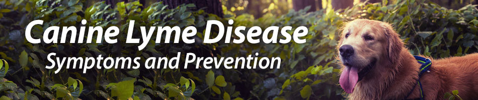 Canine Lyme Disease – Symptoms and Prevention