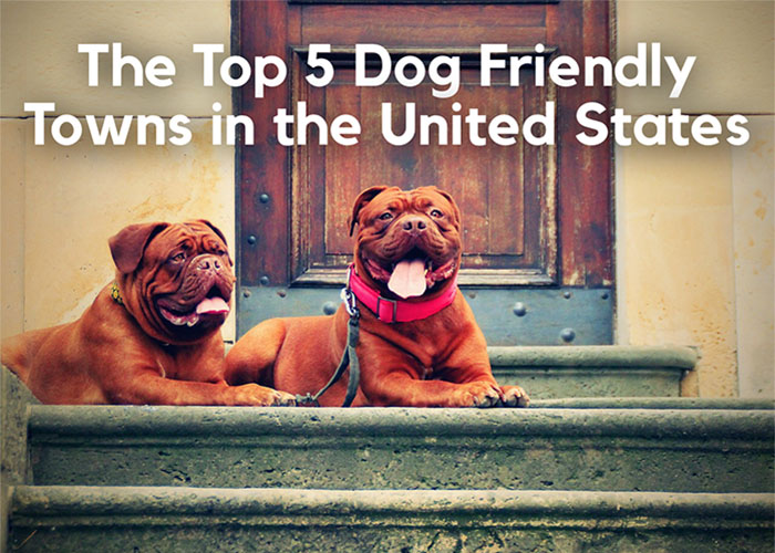 The Top 5 Dog-Friendly Towns in the United States