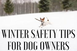Thumbnail Winter Safety Tips for Dog Owners